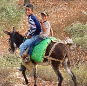 Palestinian boys on a donkey