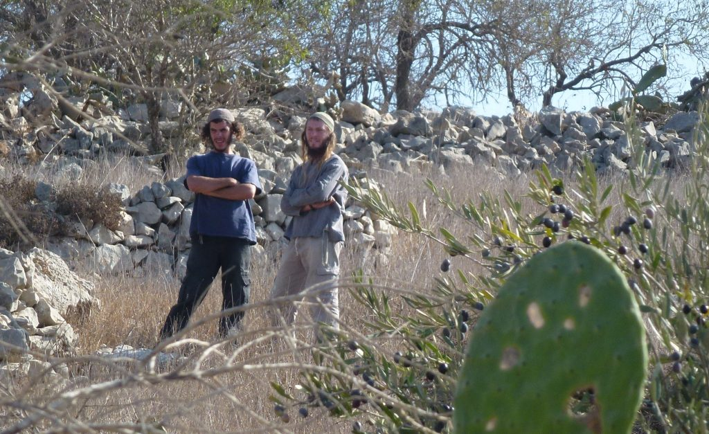 Settlers from Bracha in Palestinian olive grove