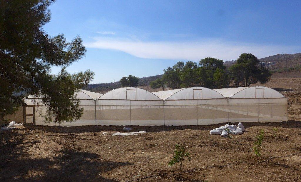 Burin School's polytunnels