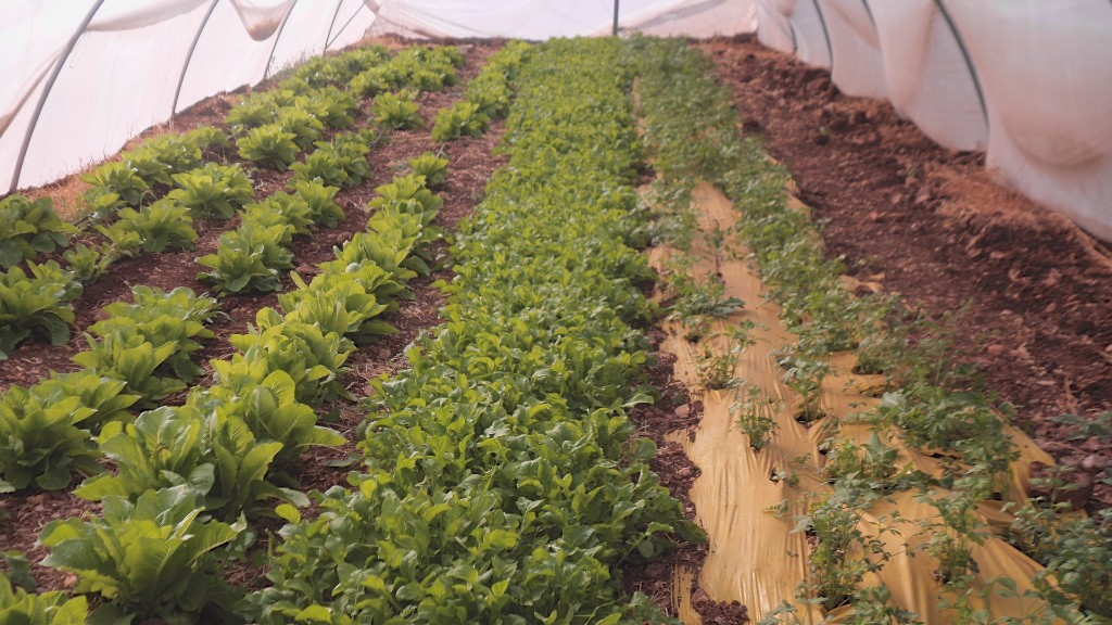 Burin school farm Palestine polytunnel