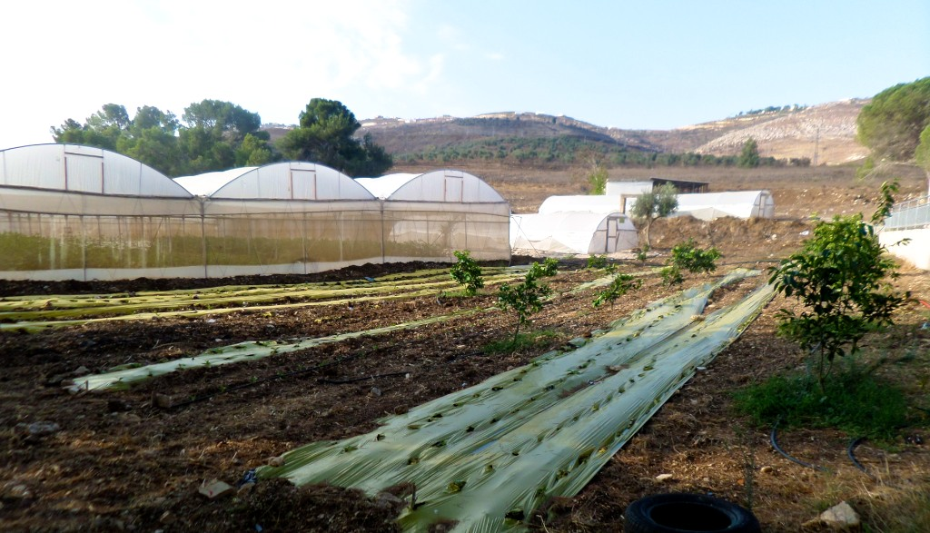 Burin Schhol farm in West Bank, Palestine