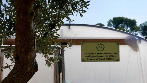 Palestinian school farm polytunnel