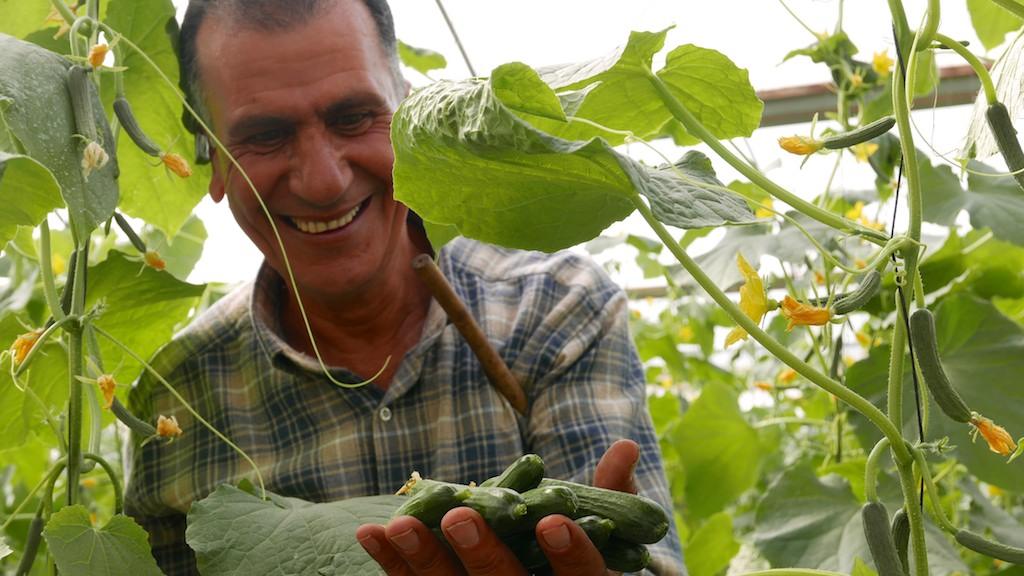 greenhouse at Palestinian school farm, Burin